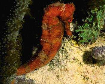 Лучик света - энциклопедия для детей. Морские животные: морской конек