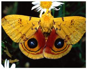 Для детей насекомые бабочка